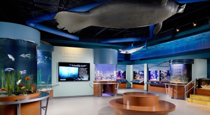 South-Florida-Science-Center-and-Aquarium_PalmBeach-420x230 - palm beach
