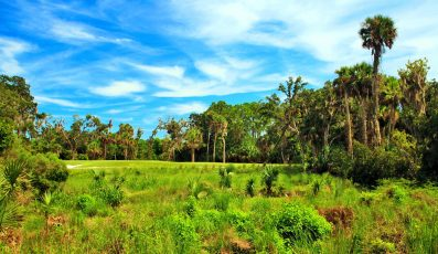 hammock_creek_golf_club_stuart_palm_beach_fl-397x230 - palm beach